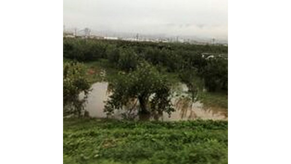 Apple trees that are flooded in Hoyasu, Nagano city ©JPF