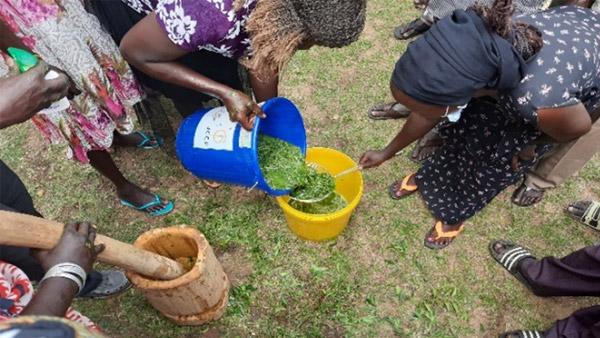 Residents being shown how to make homemade pesticide from natural ingredients that cause no harm to humans or livestock ©REALs